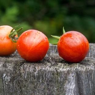 Сорт томата Joie De Vivre (Радость жизни)