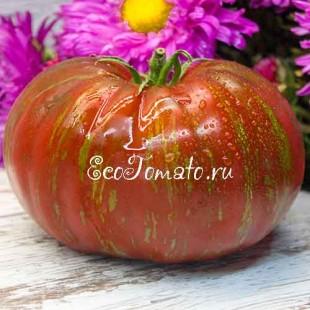 Сорт томата Large Barred Boar (Большой полосатый кабан), США