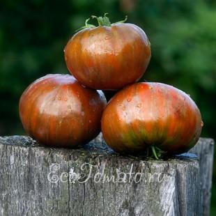 Сорт томата Большой Полосатый Кабан