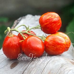 Сорт томата Пасхальное яйцо