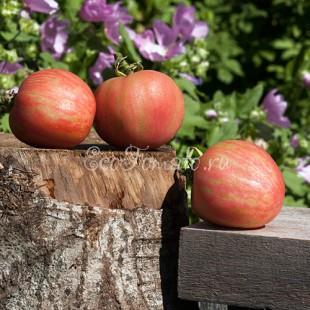 Сорт томата Розовый пушистый кабан