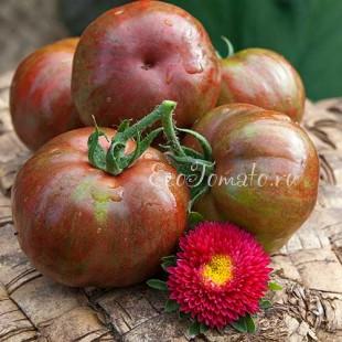 Сорт томата Queen Anne (Королева Анна), США
