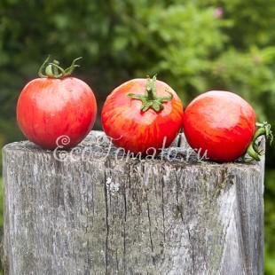 Сорт томата Райская Акварель