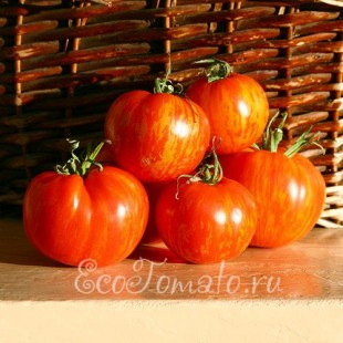Сорт томата Зебра Красная