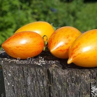 Сорт томата Sweet Cream (Сладкий крем), США