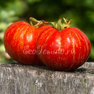 Сорт томата Scabitha (Скабита), США