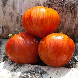Сорт томата Striped heart (Полосатое сердце)