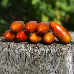 Сорт томата Sweet Casady (Сладкий Касади, США)