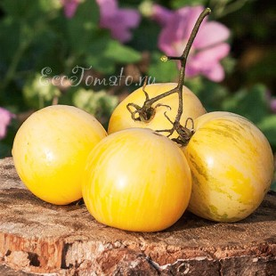 Сорт томата White Furry Boar, Белый мохнатый Кабан