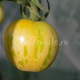 Сорт томата Huan U