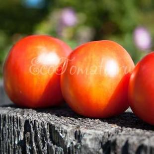 Сорт томата Тигрелла