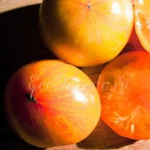 Зебра Оранжевая
