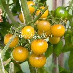 Amethyst Cream Cherry XL (Аметистовый крем, черри размер XL), США