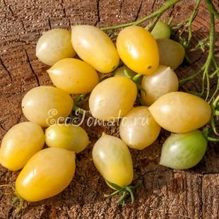 Сорт томата Barry's crazy cherry (Сумасшедшая вишня Барри), США
