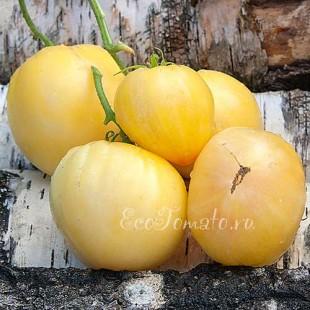 Сорт томата Белая Вишня
