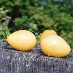 Old Ivory Egg (Олд ивори эг)