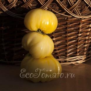 Сорт томата Зебра Белая