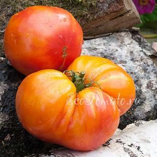 Сорт томата Amazing Grace (Амазинг грейс, Удивительная Грейс)