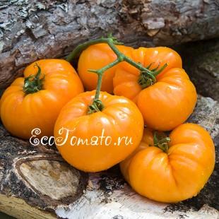 Сорт томата Apricot Brandywine (Абрикосовый Брендивайн), США