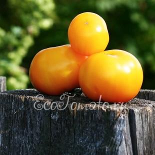 Сорт томата Желток, Украина