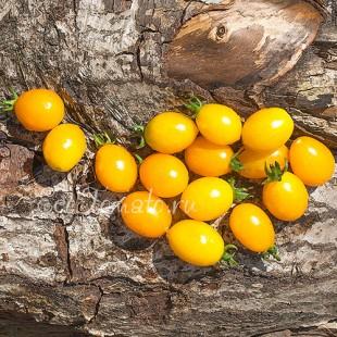 Сорт томата Ильди
