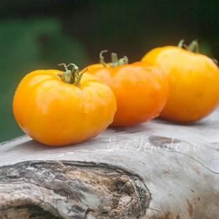 Сорт томата Медовый Ароматный