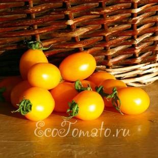 Сорт томата Мускат Желтый
