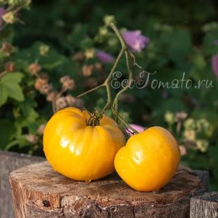 Сорт томата Царевич