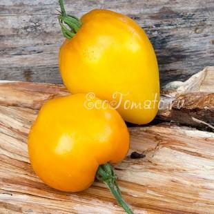 Сорт томата Золотые Купола