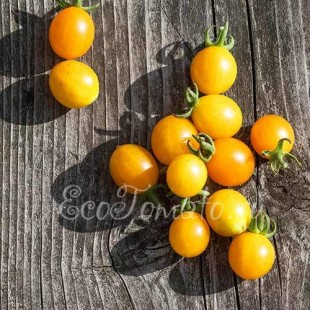 Сорт томата Millefleur (Мильфлёр), Франция